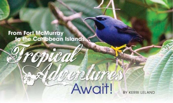 From Fort McMurray to the Caribbean Islands… Tropical Adventures Await!