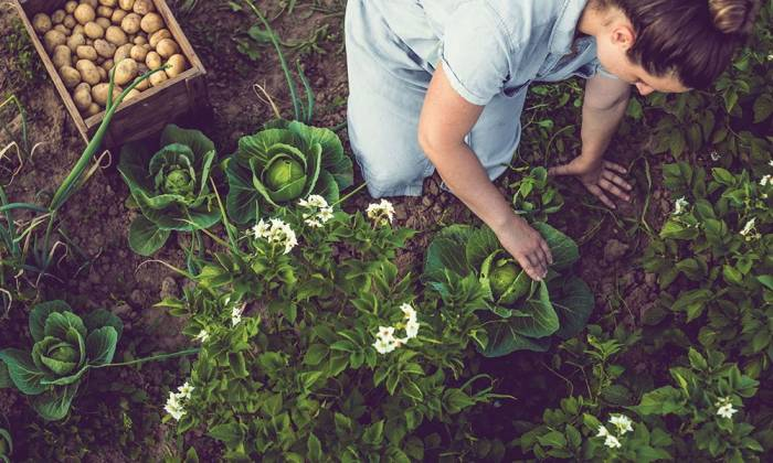 Canadian Tire's Gardening Trends of 2019